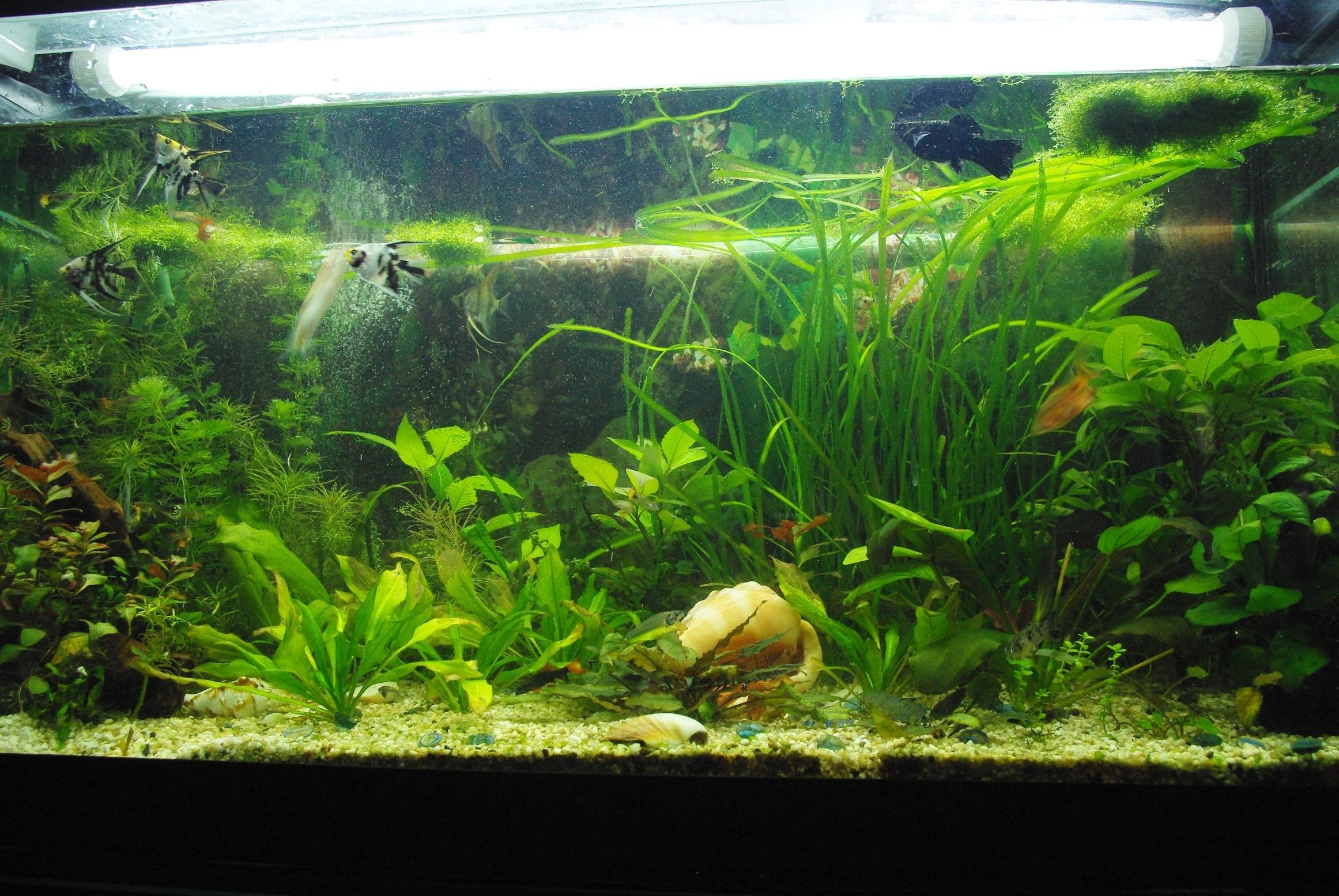 Akwarium w Pracowni Przyrodniczej