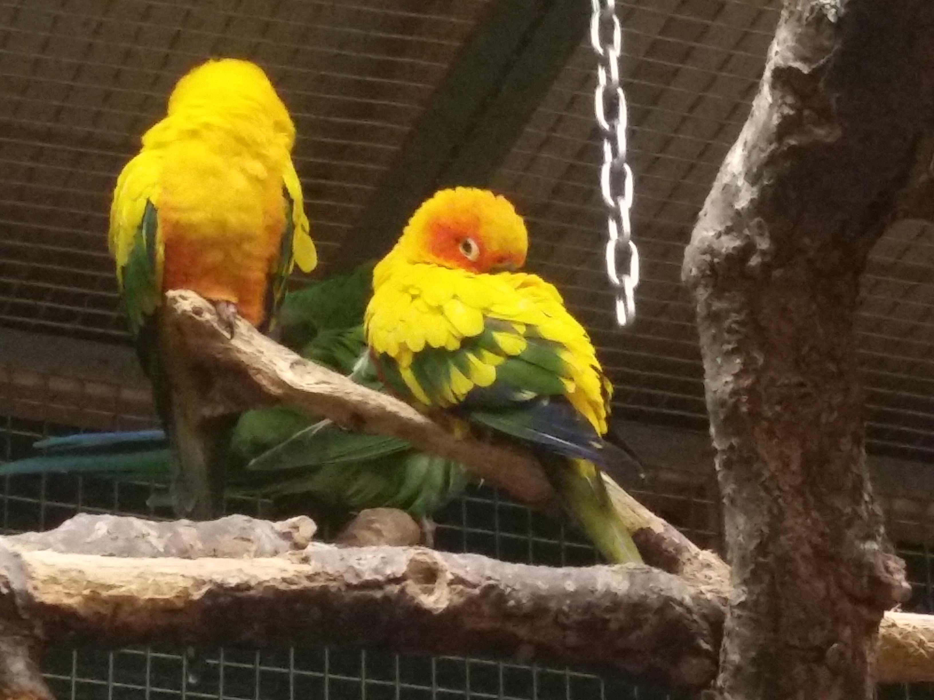 2018-3-7 - Papugi